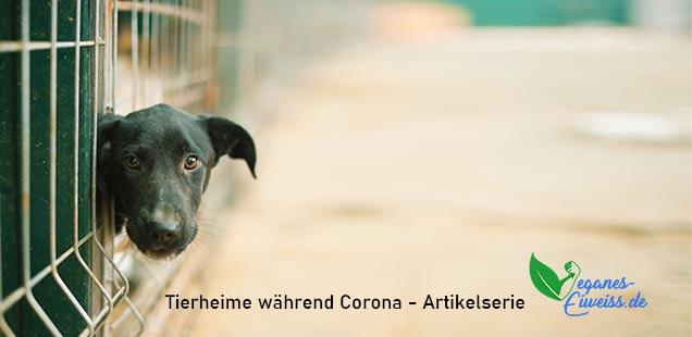 Tierheime während Corona